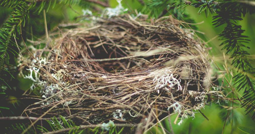 Het warme nest van de Broedplaats